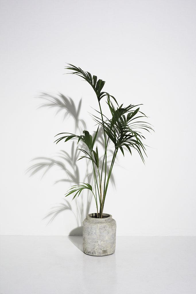 london photography studio prop tall palm