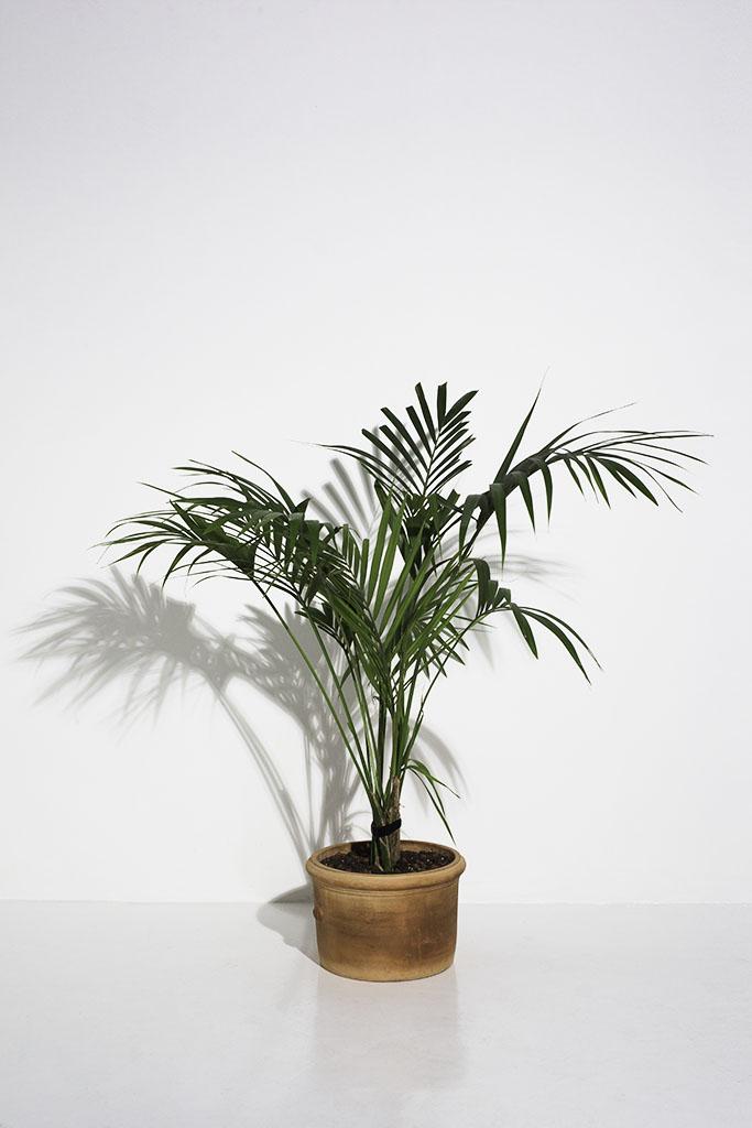 london photography studio prop green palm